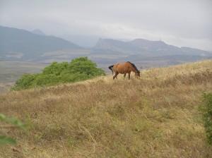 Krajina poblíž vesnice Chachmach
