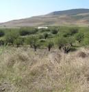 Postřehy a dojmy z Náhorního Karabachu  (III. díl)