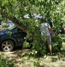 Na Korsice nám na auto spadl strom.