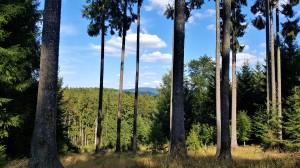 krajina Českého lesa